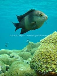 fotografias_submarina_fotosub_diving_buceo_mediterraneo_barcelona-2