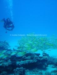 fotografias_submarina_fotosub_diving_buceo_mediterraneo_barcelona-5