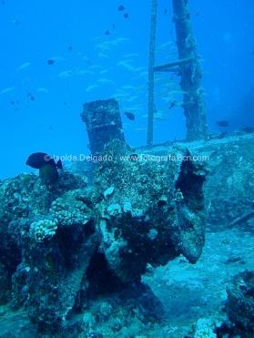 fotografias_submarina_fotosub_diving_buceo_mediterraneo_barcelona-8