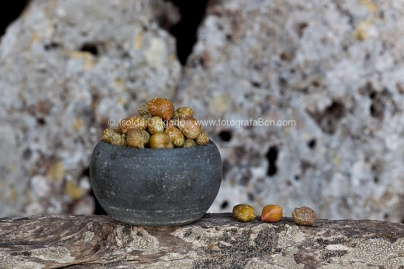 Made_in_menorca_FotografaBcn_fotografo_gastronomia_culinario_comida-24